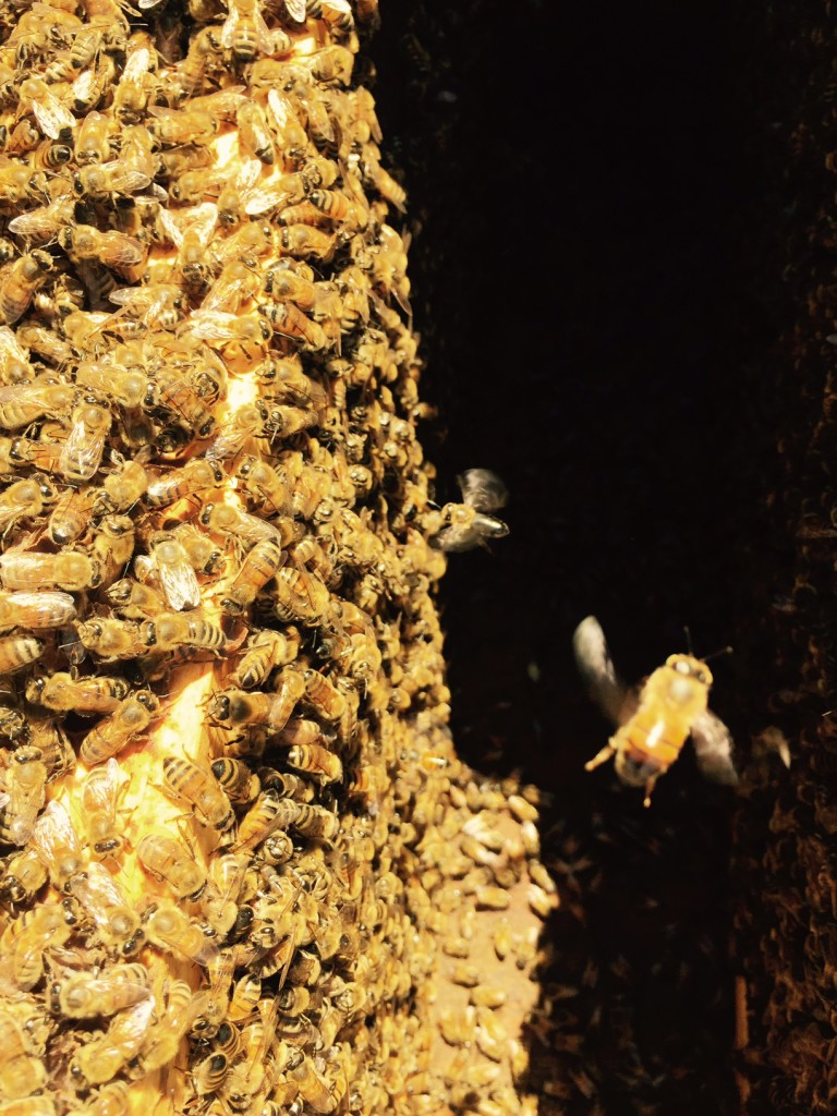 Dr. P's bees. He has 36 hives (and counting) across East Texas.